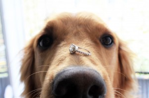How to include your dog in your marriage proposal.